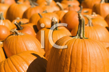 Royalty Free Photo of a Group of Pumpkins at a Produce Market