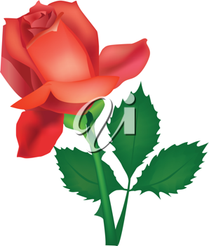 Royalty Free Clipart Image of a Red Rose