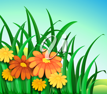 Illustration of a garden in the hill with fresh orange and yellow flowers