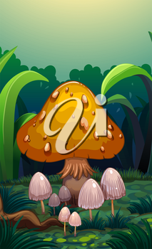 Illustration of the mushrooms at the forest