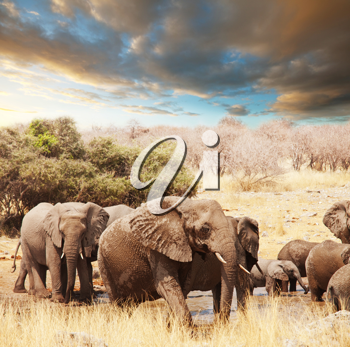 Royalty Free Photo of Elephants