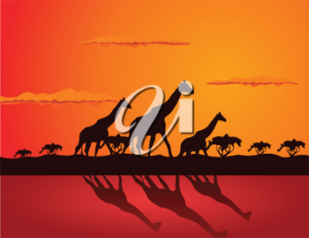 Royalty Free Clipart Image of Giraffes