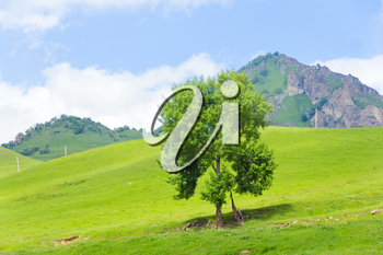 Summer mountain landscape with lonely green tree