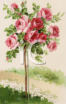 Royalty Free Victorian Illustration of a Standard Rose Tree