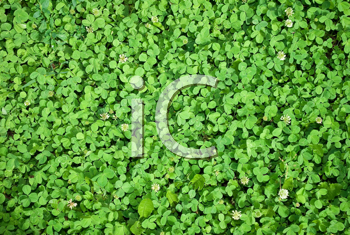 Royalty Free Photo of a Clover Background