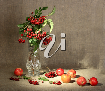 Bouquet of ashberry in glass vase and group of a red apples. Close-up. Still-life on linen textile backdrop.